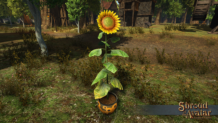 item_login_sunflower_potted.jpg