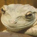 Mugly Wumple