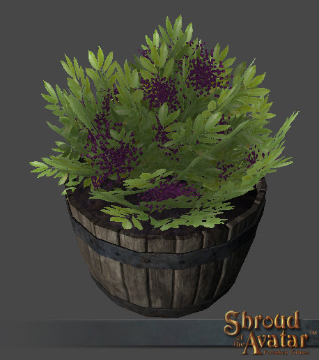 SotA_Royal_Elderberry_Bush