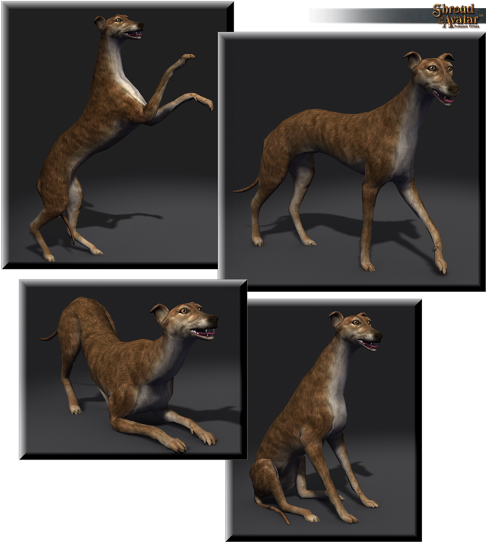 SotA_Brindle_Greyhound