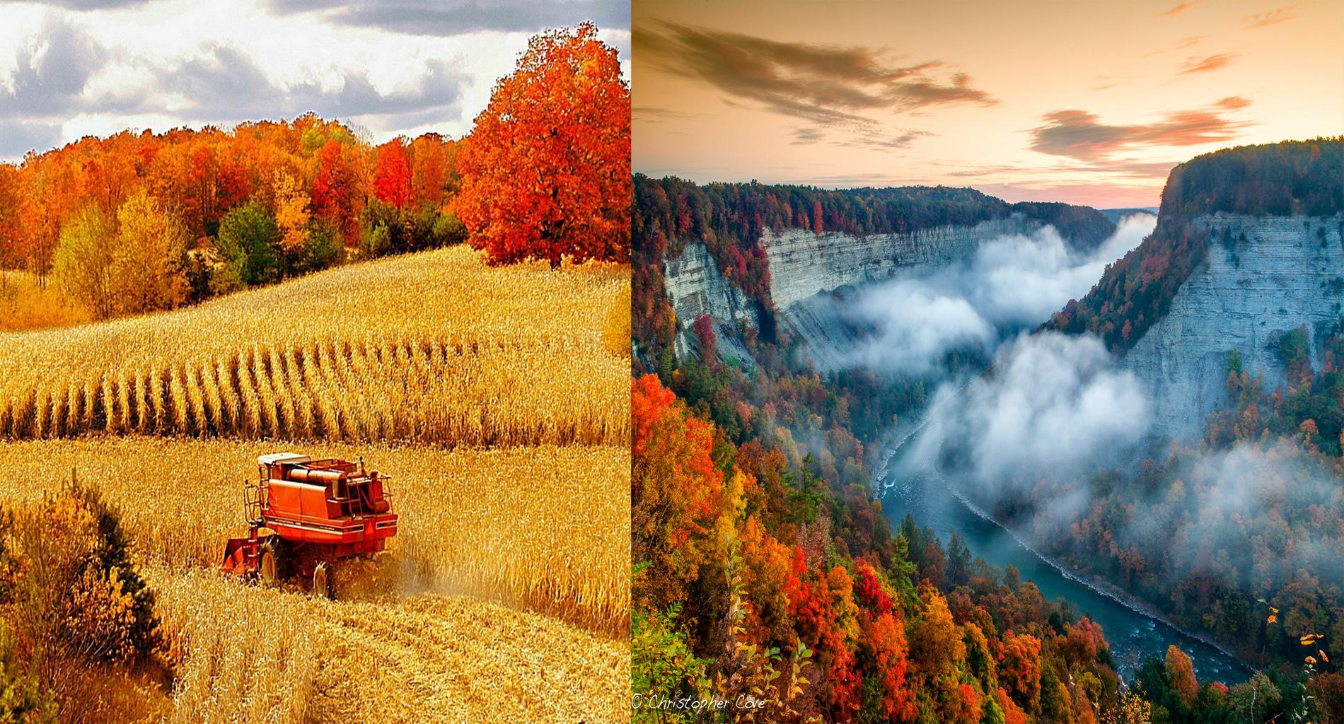 harvest-inspiration