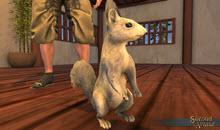 White Squirrel Pet