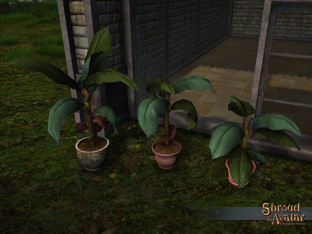SS_4Elg_Bananaplants_A-1024x768.jpg